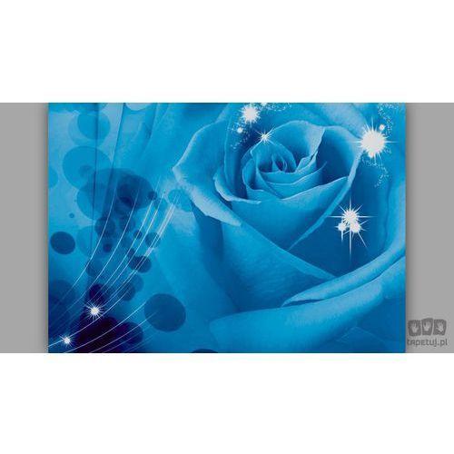 Fototapeta niebieska róża z odbłyskami 581 marki Consalnet