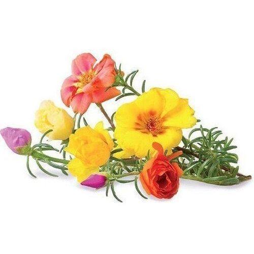 Click & grow Kapsułki z nasionami smart soil 3 szt. portulaka (4742793007434)