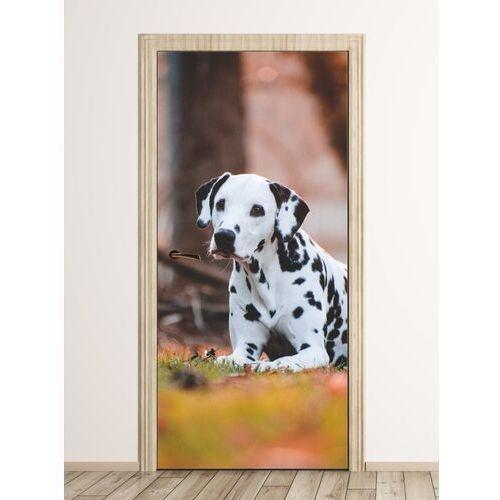 Fototapeta na drzwi czarno-biały pies fp 6176