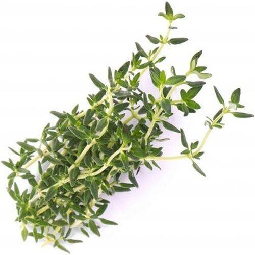 Wkład nasienny lingot zioła podstawowe tymianek