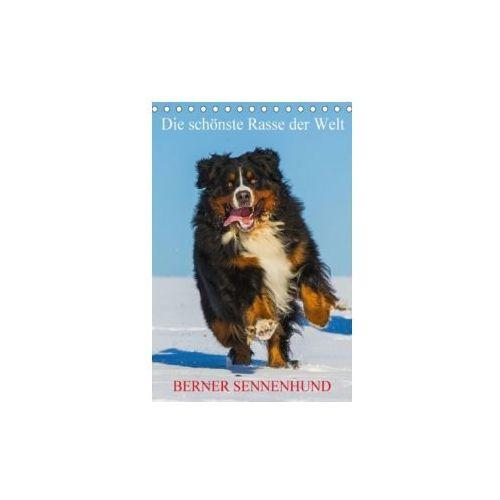 Die schönste Rasse der Welt - Berner Sennenhund (Tischkalender 2018 DIN A5 hoch)