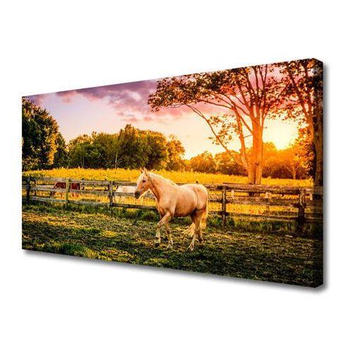 Obraz na płótnie koń łąka zwierzęta przyroda marki Tulup.pl