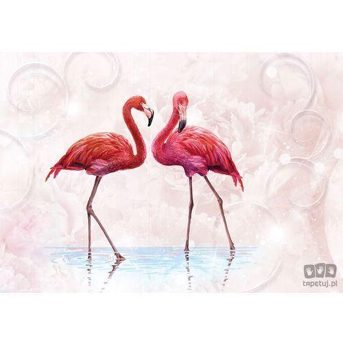 Fototapeta Dwa flamingi 10199