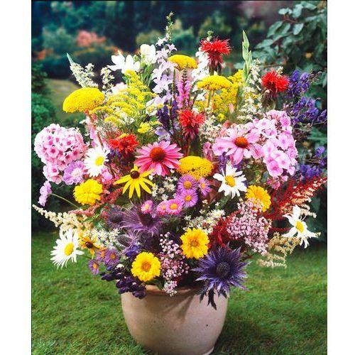 Kolekcja roślin wieloletnich do bukietów 5 szt marki Starkl