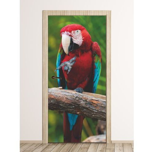 Wally - piękno dekoracji Fototapeta na drzwi papuga fp 6211