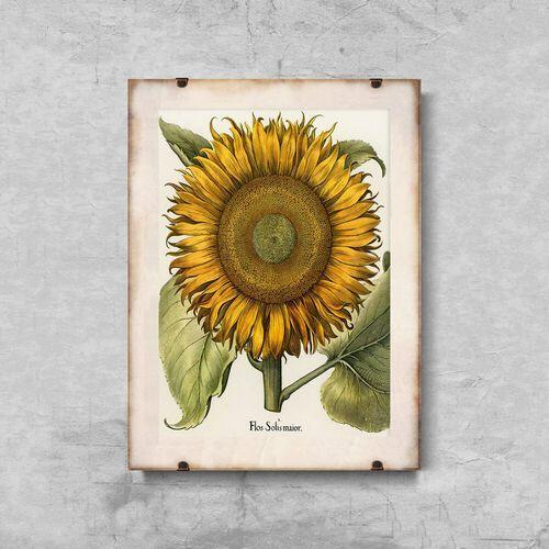 Plakat w stylu retro Plakat w stylu retro Botaniczny nadruk słonecznika