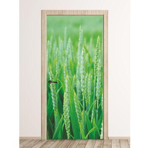 Fototapeta na drzwi pole pszenicy FP 1810