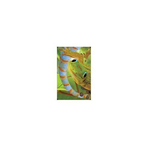 Minikartka 3D - Gekon - WORTH-KEEPING OD 24,99zł DARMOWA DOSTAWA KIOSK RUCHU