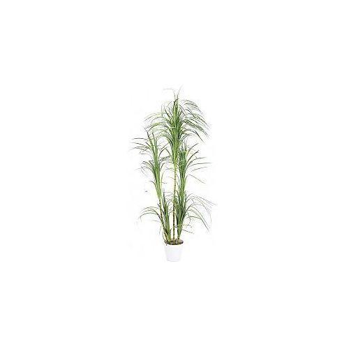 dracena bush, 215cm, sztuczna roślina, marki Europalms