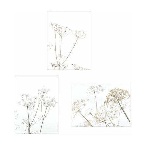 Zestaw 3 plakatów Kwiaty Polne 30 x 40 cm (5901844248281)