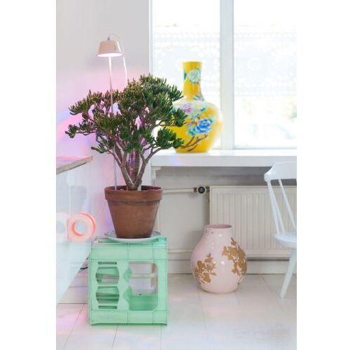 Linea light Chlorophyll bulbo collection nocna 8011