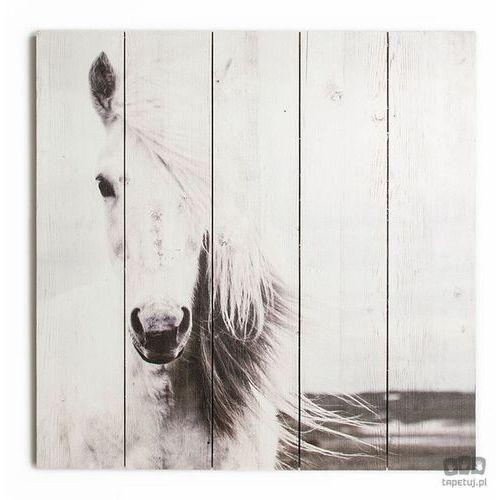 Obraz na drewnie Biały koń 42-245, 42-245