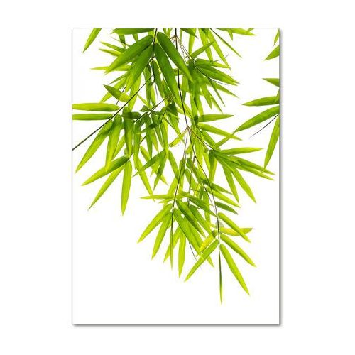 Foto obraz zdjęcie na szkle Liście bambusa