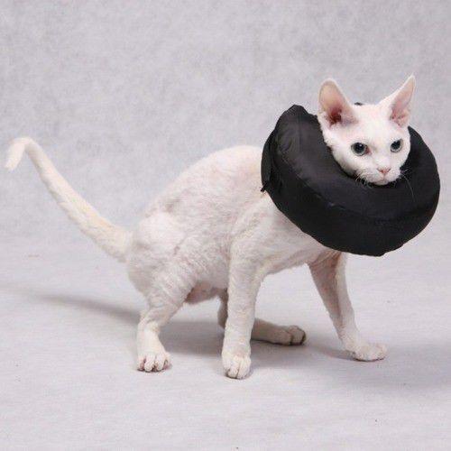 Grande Finale miękki kołnierz zabezpieczający pozabiegowy po urazowy dla kota 1