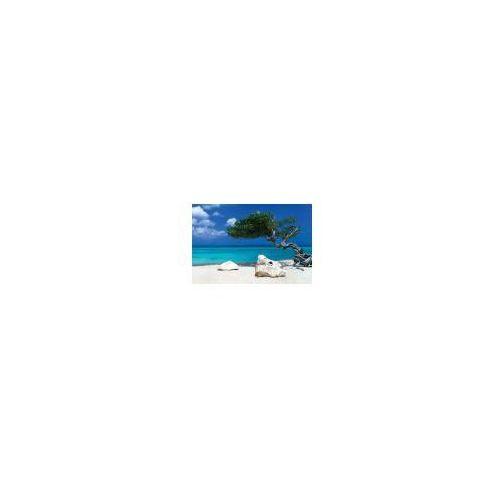 Gb Karaiby - drzewo divi divi - piękna plaża - plakat (5028486126897)