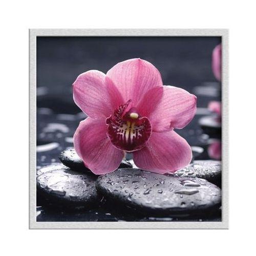 Obi Obraz 30 x 30 cm różowy storczyk (5901554500181)