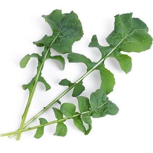 Véritable - warzywa liściowe - wkład nasienny - rukola (do doniczek autonomicznych)
