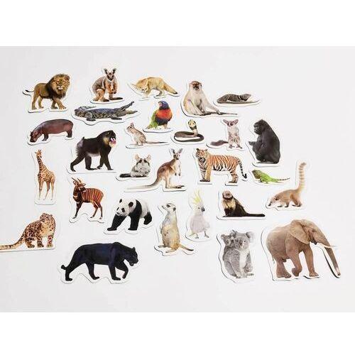 Magnesy poznaje zwierzęta egzotyczne