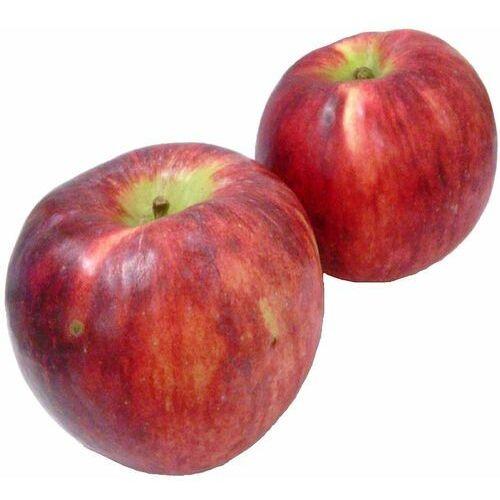 Opakowanie zbiorcze (kg) - jabłka świeże bio (jonagored-polska) (około 13 kg) marki Świeże dystrybutor: bio planet s.a., wilkowa wieś 7, 05-084 leszno k.