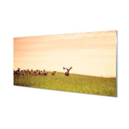 Obrazy na szkle stado jeleni pole wschód słońca marki Tulup.pl