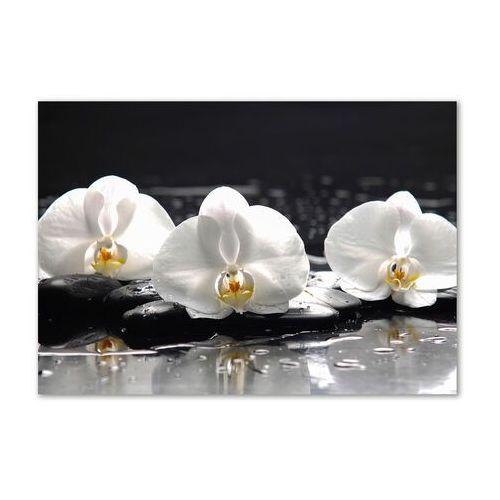 Obraz zdjęcie na ścianę akryl Orchidea