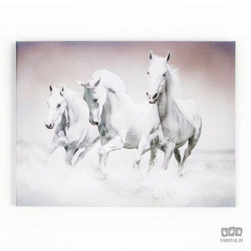 Obraz Białe konie w galopie 41-546