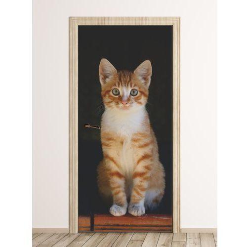 Fototapeta na drzwi rudy pręgowany kot FP 6168