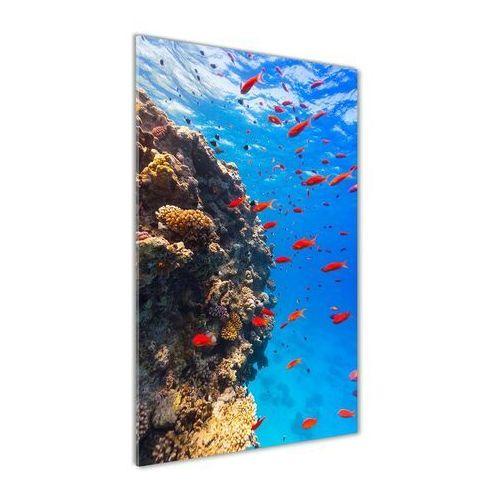Foto obraz akrylowy do salonu Rafa koralowa