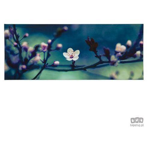 Obraz Kwitnące drzewo jabłoni 104571