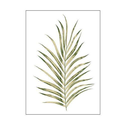Art canvas Kanwa liscie palmy 50 x 70 cm (5901844231429)