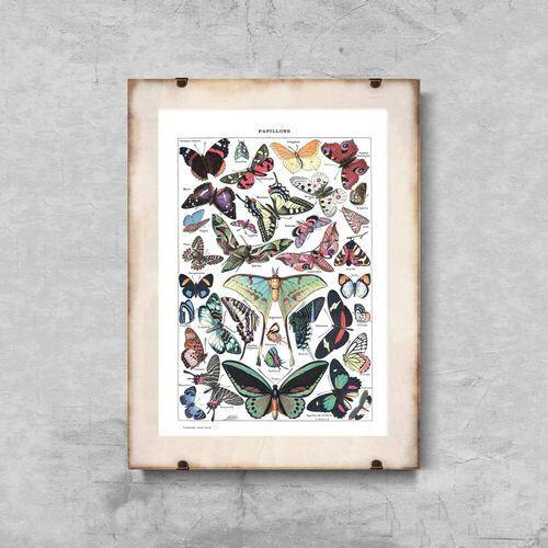 Vintageposteria.pl Plakat vintage plakat vintage botaniczny motyl adolphe millot papillons