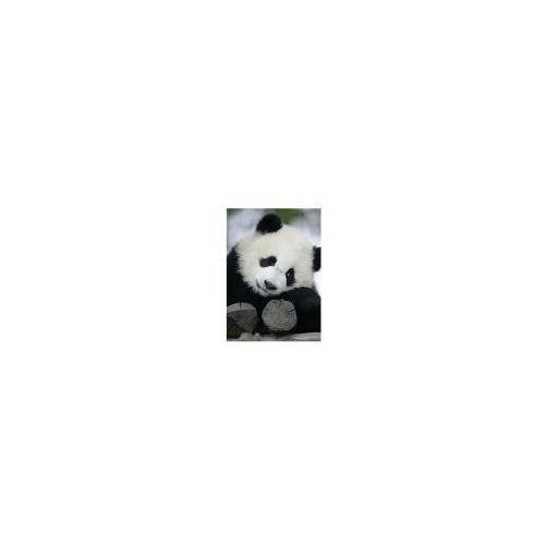 Wielka Panda - reprodukcja