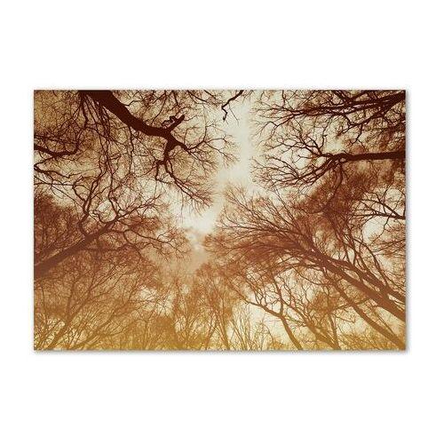 Foto obraz zdjęcie szkło hartowane Las