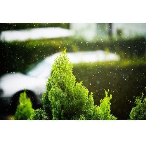 Fototapeta na ścianę pierwszy śnieg fp 4676 marki Wally - piękno dekoracji