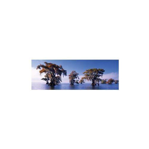 1000 EL. Bald Cypresses, E.Humboldt (4001689296070)