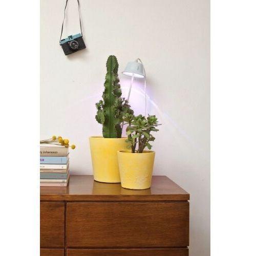 Chlorophyll Bulbo Collection Nocna Linea Light 8012