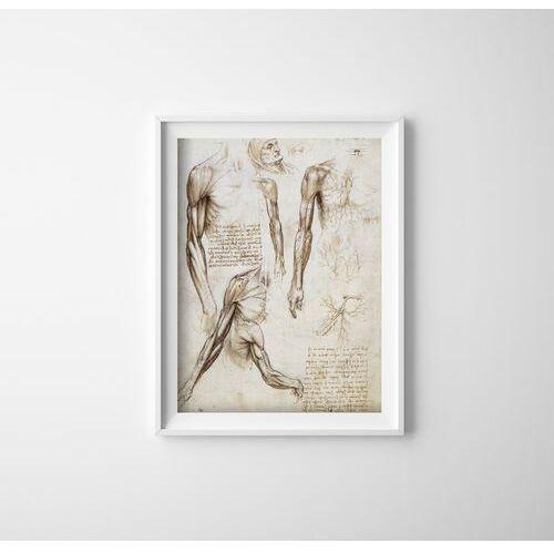 Plakat w stylu vintage plakat w stylu vintage mięśnie kończyn górnych da vinci marki Vintageposteria.pl