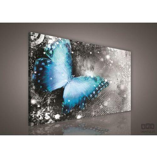 Obraz niebieski motyl pp218 marki Consalnet