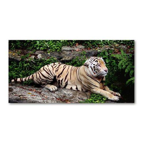 Fotoobraz na ścianę szklany Tygrys na skale