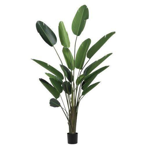 Kwiat Strelitzia L