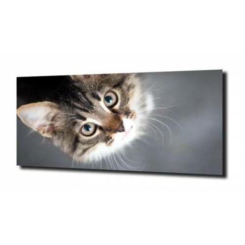 obraz na szkle, panel szklany Kotek portret 100X80, D960