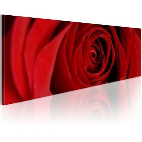 Artgeist Obraz - róża północy
