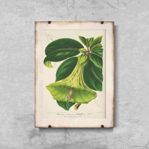 Plakat retro do salonu plakat retro do salonu 1957 devil trumpets floral marki Vintageposteria.pl