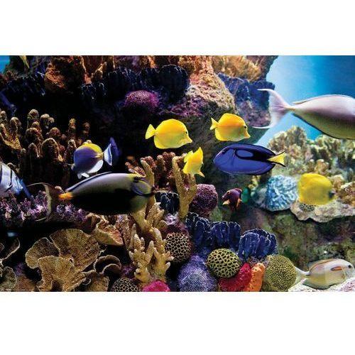Ryby Tropikalne Rybki Rafa Koralowa #8211; plakat (5050574341257)