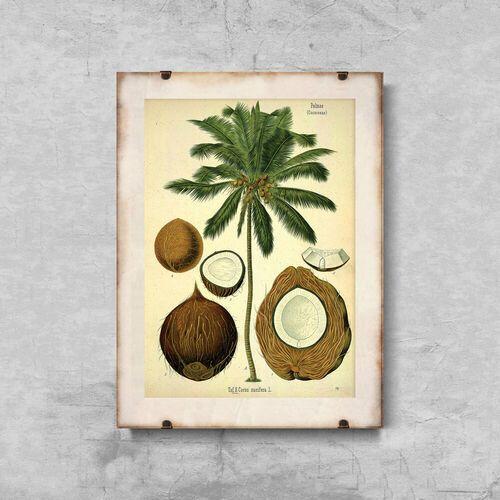 Plakat w stylu vintage plakat w stylu vintage botaniczny nadruk palmy kokosowej marki Vintageposteria.pl