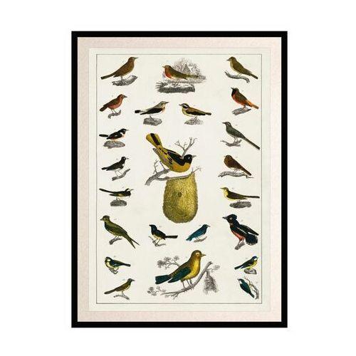Knor Obraz ptaki 70 x 100 cm