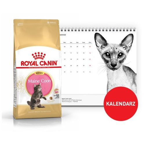 ROYAL CANIN Maine Coon Kitten 36 10kg + Kalendarz 2018