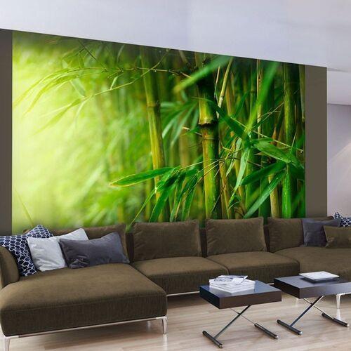 Fototapeta - dżungla - bambus marki Artgeist