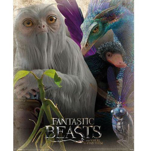 Gf Fantastyczne zwierzęta i jak je znaleźć fantastyczne zwierzeta - plakat (5050574506762)