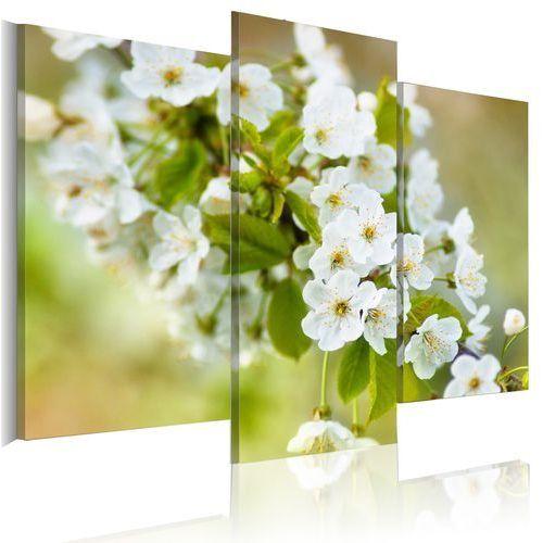Obraz - Motyw z białymi kwiatami wiśni